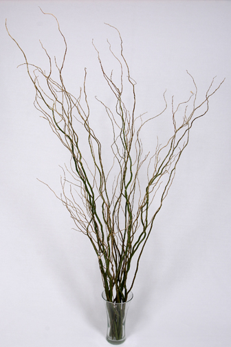 Green Curly Willow Ottawa Glad Growers